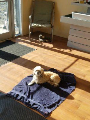 faithful companions pet boarding interior dog lying in the sun