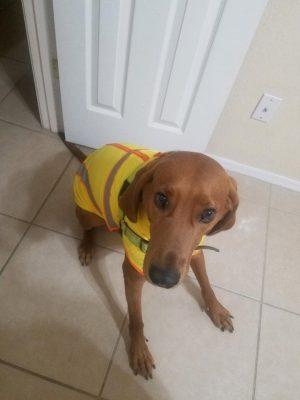 faithful companions pet boarding client dog image
