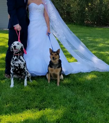faithful companions pet boarding dogs at wedding
