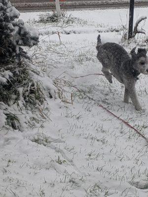 faithful companions pet boarding goat outside in winter